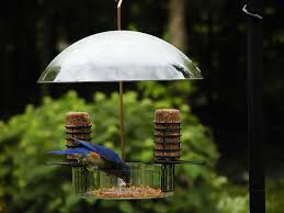 choice supper dome seed suet and mealworm bird feeder