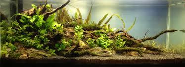 wei nature aquarium aquascaping world forum