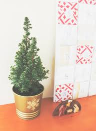real mini trees toreal tree gift giftmini