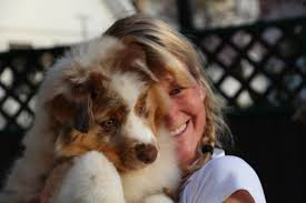 australian shepherd crufts 2015 bentley harmony hill australian shepherds