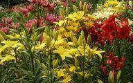 flowers for garden 169 high resolution wallpaper