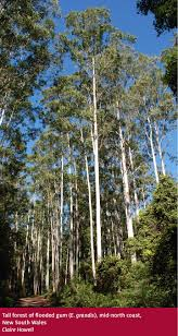 native plants south east queensland forests australia eucalypt forest department of agriculture and