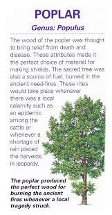 douglas maple acer glabrum pacific northwest native tree 148 best plants gardens etc images on pinterest flowers