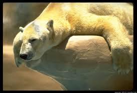 what u0027s the funniest bear pic animal humor fanpop