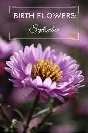 top 25 best september birth flower ideas on pinterest birth