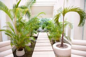 indoor garden ideas garden ideas
