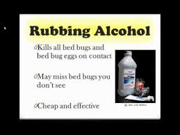how can you get rid of bed bugs how to get rid of bed bugs youtube