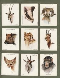 collectable cigarette cards animals heads 1932 by players