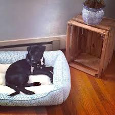Doggie Beds Hard Wearing Dog Beds Discover 17 Best Ideas About Designer Dog