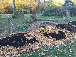 What Kind Of Mulch For Vegetable Garden by Sheet Mulching The Druid U0027s Garden
