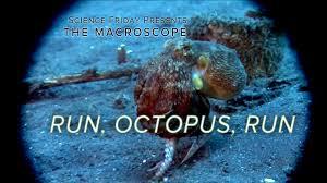 run octopus run youtube