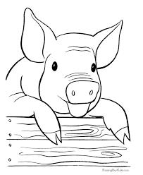 farm pig coloring