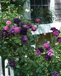 rose garden design tips hgtv
