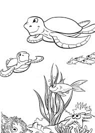 sea turtle coloring page printable animal coloring pages of