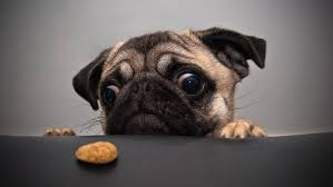raw food diet for dogs simple facts and advice about raw feeding