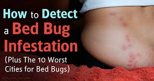 How Long Do Bed Bug Bites Take To Show Up Bed Bug Infestations Soaring In The Us