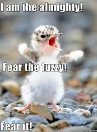 Fear Meme - fear the fuzzy meme by yin suneku memedroid