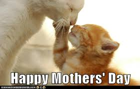Happy Kitten Meme - lolcats mothers day lol at funny cat memes funny cat pictures