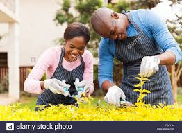 happy young african couple trimming plants at home stock photo