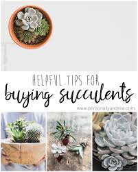 succelents 5 helpful tips for buying succulents personally andrea 5
