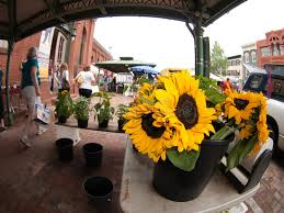 sunflowers for sale sunflowers for sale at market editorial photography image of