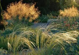 outdoor garden with ornamental grasses and shrubs caring tips