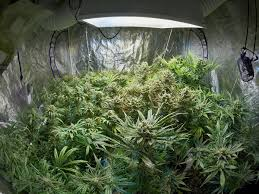 how to grow weed in small spaces garden ideas