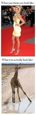 Giraffe Hat Meme - image 269225 what you think you look like vs what you