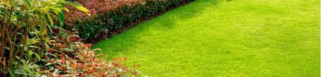 turf lawn care