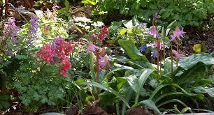 download spring bulbs for shade solidaria garden