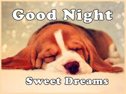 Good Nite Memes - most lovable funny and cute good night memes