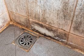 mold blog u2022 certified mold remediation