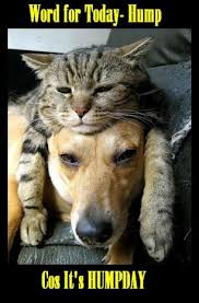 Hump Day Memes - hump day kitty cat and her pet dog