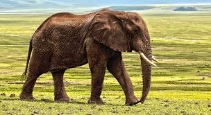 dreams about elephants interpretation and meaning