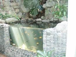 Types Of Fish For Garden Ponds - 22 small garden or backyard aquarium ideas will blow your mind