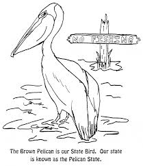 pelican coloring pelican free printable coloring pages animals