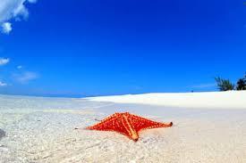 the 10 best grand cayman tours tripadvisor