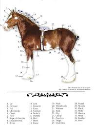 How Tall Is A Flag Pole Clydesdale Breeders Of The Usa Frequently Asked Questions