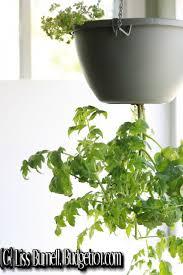 Upside Down Tomato Planter by Myo Upside Down Tomato Planter Budget101 Com