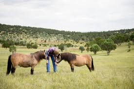 New Mexico travel pony images Horses dogs new mexico a photographer 39 s dream lifeexposed jpg