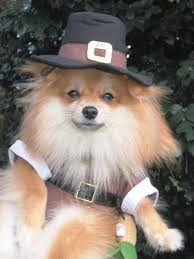 official site pomeranians animal and animal