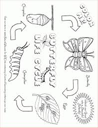 caterpillar life cycle coloring pages lightbulb books butterfly