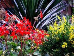 Xeriscape Landscaping Ideas Xeriscape Landscape Design Is Going Green With Style