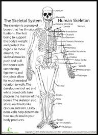 collection of solutions science worksheets for grade 5 human body