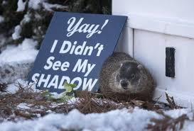 groundhogs wiarton willie shubenacadie sam predict an early