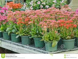 exterior design interesting weston nurseries for your garden