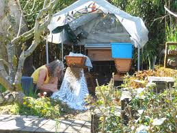 at the hive entrance look listen learn keeping backyard bees