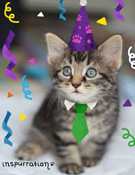dog and cat cards happy birthday cards pack of four