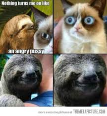 Angry Sloth Meme - grumpy cat meets seductive sloth the meta picture