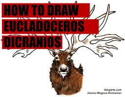 how to draw eucladoceros dicranios or ice age deer if you u0027re a